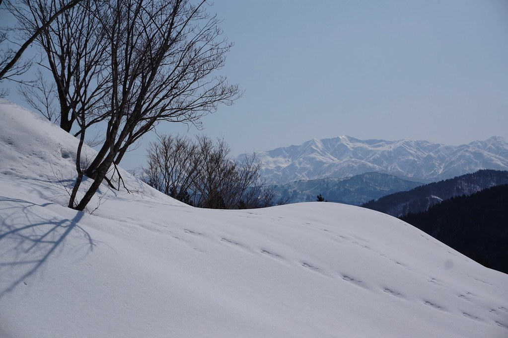 "Mt, ""HAKUSAN"" from ""NISHIYAMA"""