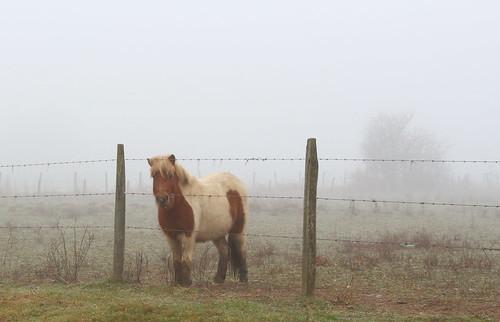 temps de brouillard HFF
