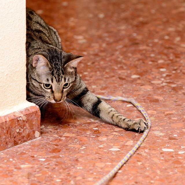 Tigris, gatita atigrada parda de ojazos verdes y cara redondita, tímida y sumisa esterilizada, nacida en Septiembre´15, en adopción. Valencia. ADOPTADA. 32577077752_efb5938c79_z