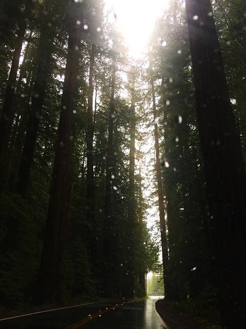 Humboldt Redwoods State Park, CA, USA