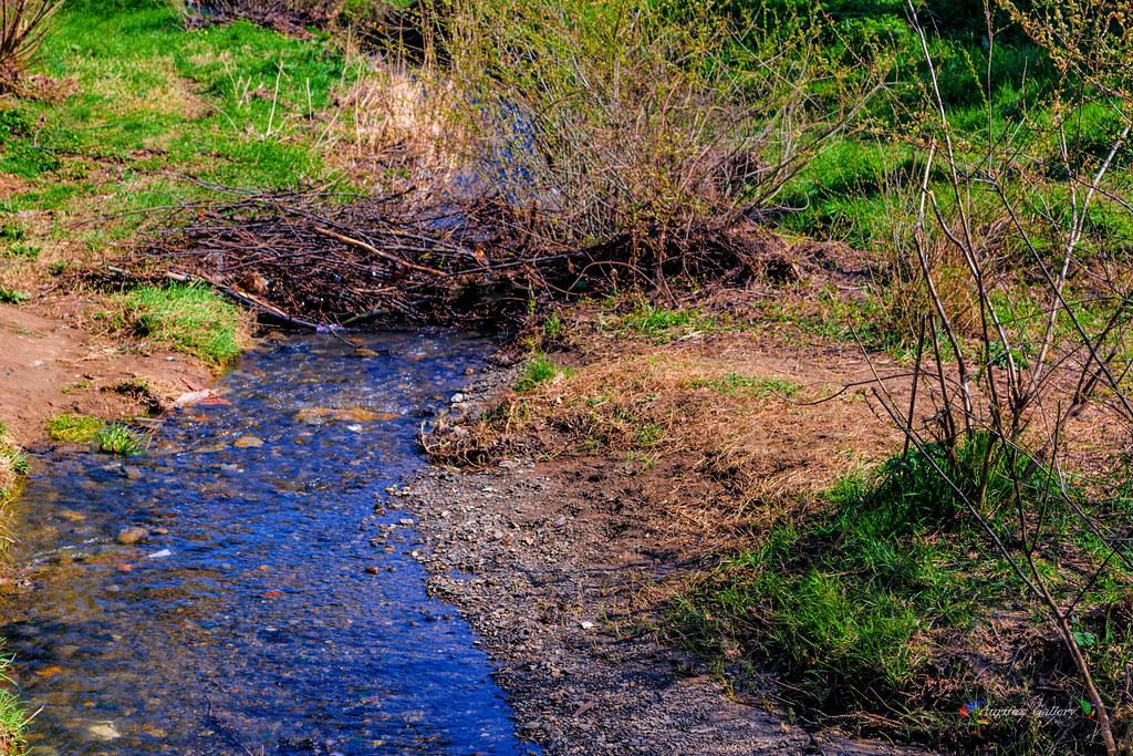 Spring streamlet