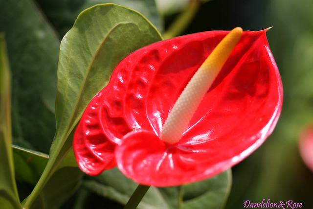 Boconganh Phan