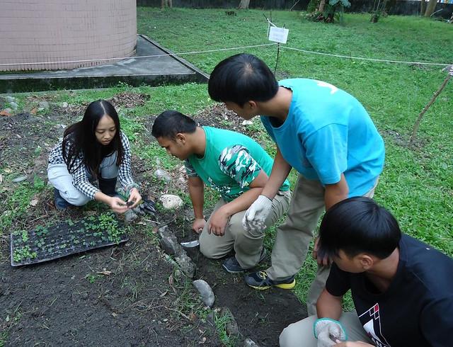 劉燕霖向學生示範如何播下菜苗。(相片提供:劉燕霖)