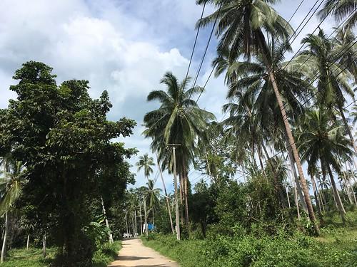Koh Samui Nathon サムイ島 ナトン