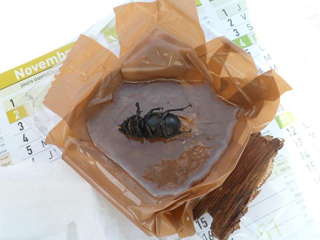 Insecte pris dans la glace 21952560462_07b8050559_z