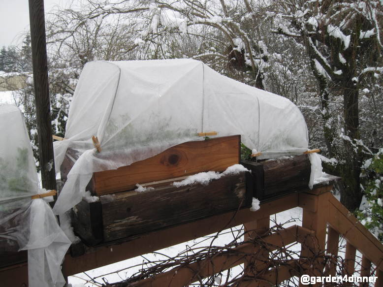 growing vegetables in snow