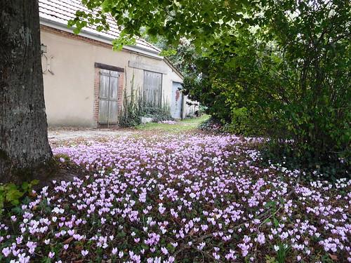 Parterre fleuri la campagne ni vre france jpc24m for Parterre 3d
