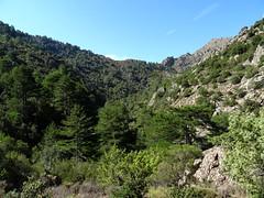 La crête de Bocca Fuatella vers la fin du ravin de l'Ancinu