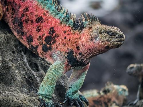 Galapagos-35.jpg