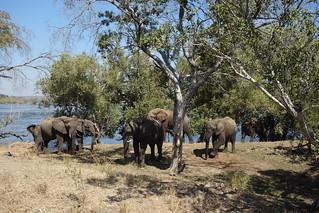 Parque Nacional de Mosi-oa-Tunya, Zambia