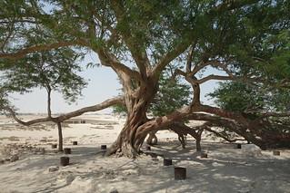 Árvore da Vida, Bahrein