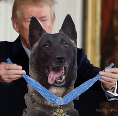 Fake photo Trump giving dog a medal