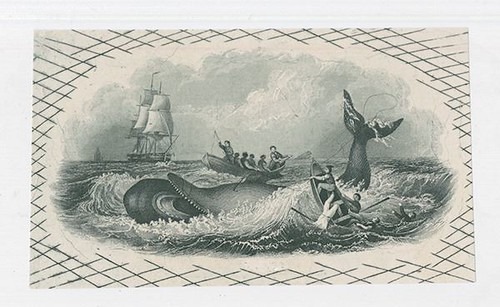 Whaling Proof Vignette