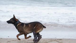 Dickin Medal dog Kuno