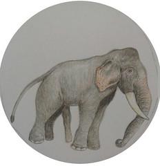 OBRW_A5_elephant_sanjaya_art_600
