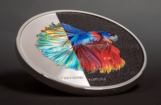 Eclectic Nature - Fighting Fish reverse tilted