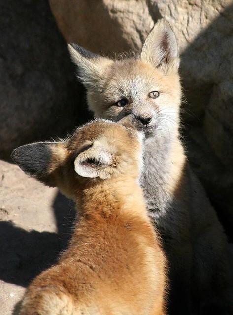 Fox Kiss Cheri Whispered To Me That She Hoped I Got That