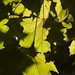 patchwork leaves