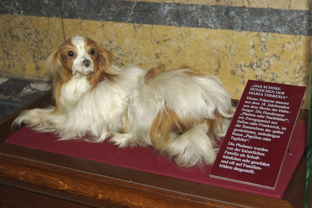 Maria Theresa's Dog | That's about all I got out of the ...