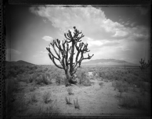 in the Mojave Desert | by darylfurr