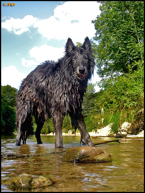 This Big Black Wolf  Large  Wishes You All A Happy -7122