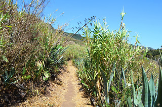 Path through cane, Tegueste, Tenerife | by Snapjacs