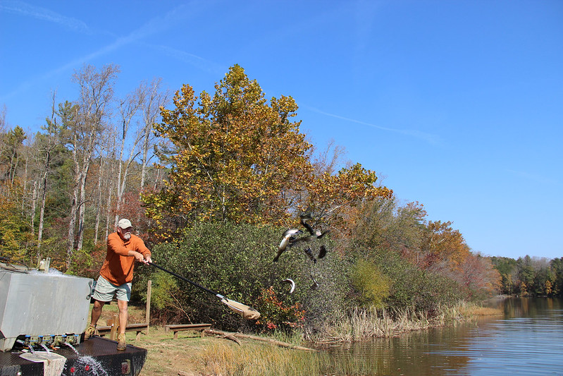Fishing for rainbow trout for Virginia out of state fishing license