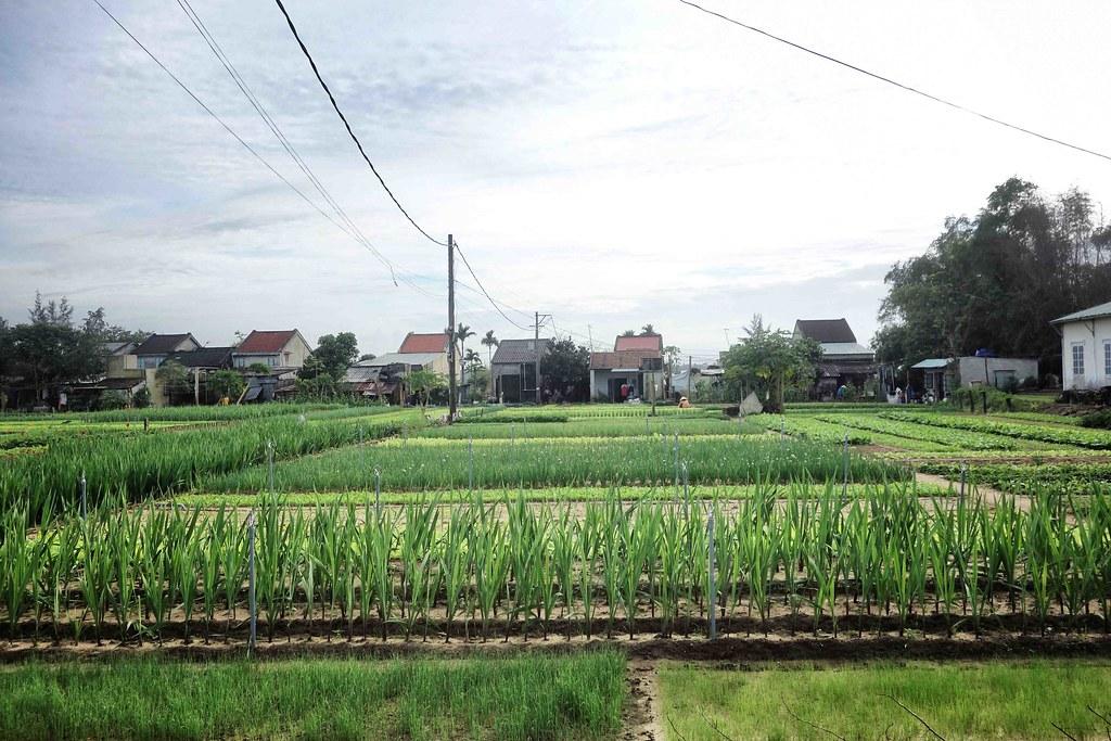 Vietnam - Hoi An - Tra Que Village