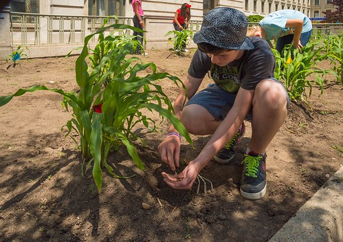 Rory Hagerty, a seventh grade student from Alice Deal Middle School, planting beans in USDA's Three Sisters Garden