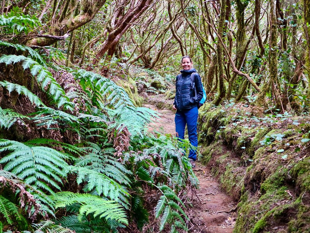 Llegar Bosque Encantado Tenerife