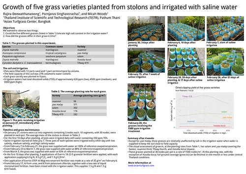 Growth of five grass varieties planted from stolons and irrigated with saline water | by Asian Turfgrass Center