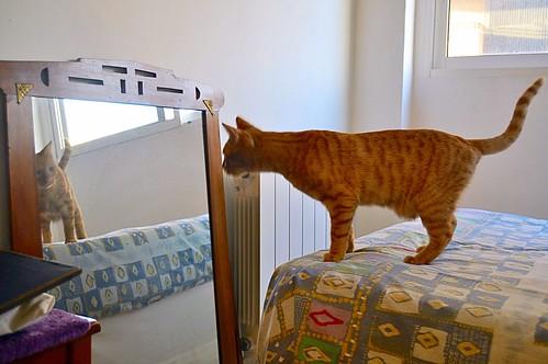 Jerry, gatito rubio guapo muy dulce y bueno, esterilizado, nacido en Abril´15 en adopción. Valencia. ADOPTADO. 23031539893_0304b86985
