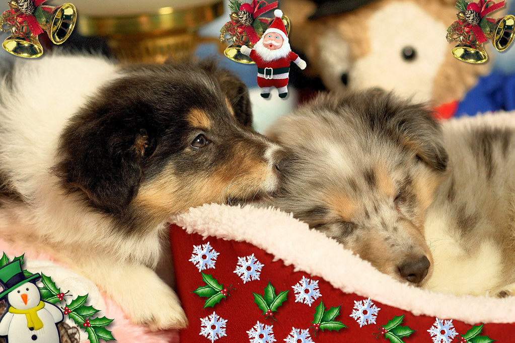 A Dream Of Christmas.The Dream Of Christmas I Know That You Have Promised To Ke