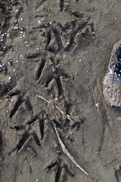 Heron Footprints