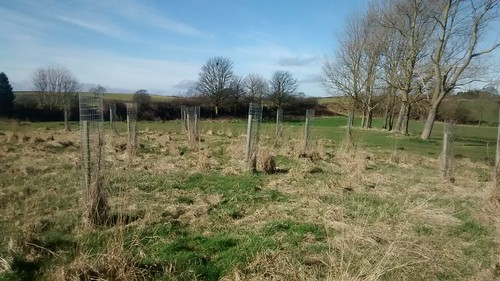 Kingsway Community Orchard Mar 17 (3)