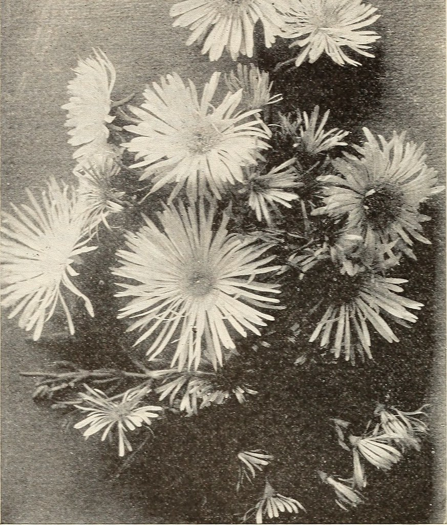 Image From Page 59 Of Catalogue Of Seeds Plants Rare Flo Flickr