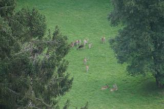 038 Uitzicht wildpark herten