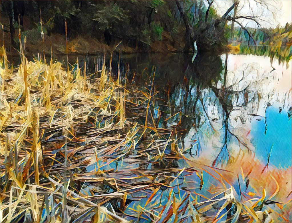 """Cattails, Lynx Lake""--dedicated to Flickr artis Amba Coltman. Your support means so much to me, Amba! Thanks!"