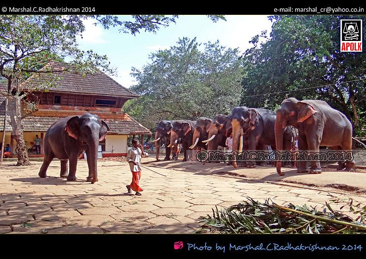 Kerala Elephant-Elephant Sanctuary-Punnathur Kotta-Guruvay ...