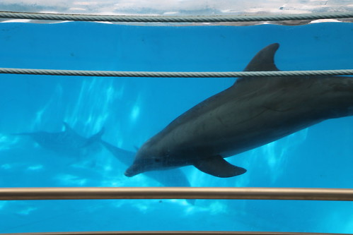 Image Result For National Aquarium Dc
