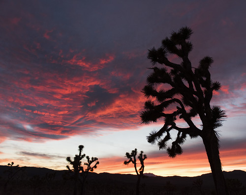 Sunset in Lost Horse Valley; 12/3/15 | by Joshua Tree National Park
