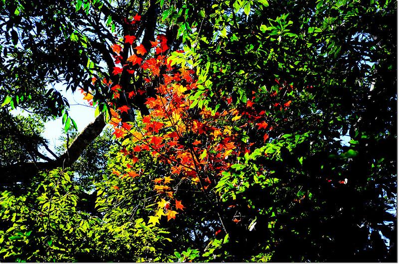 萬綠叢中一點紅