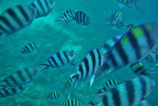 Coron - Coron Island wreckage fish