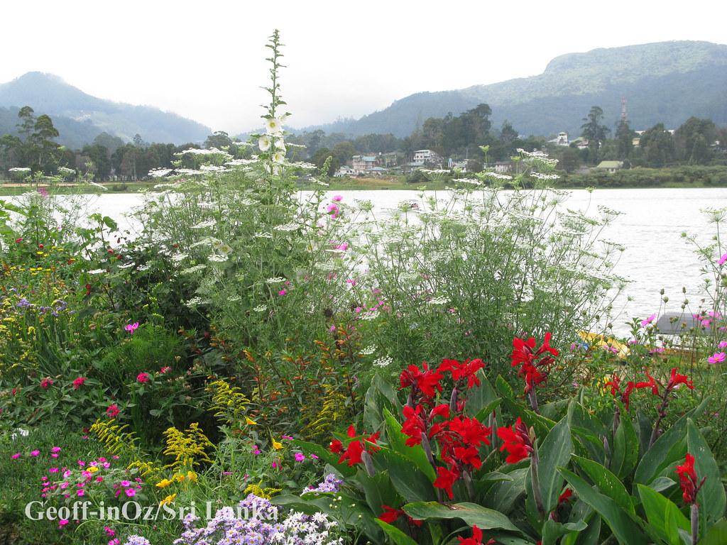 Spring Flowers Lake Gregory Nuwara Eliya Sri Lanka Flickr