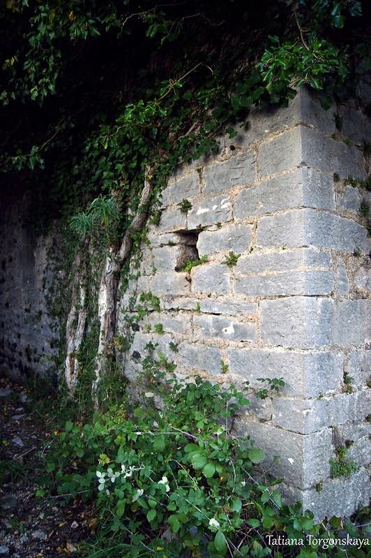 Заросшие плющом стены