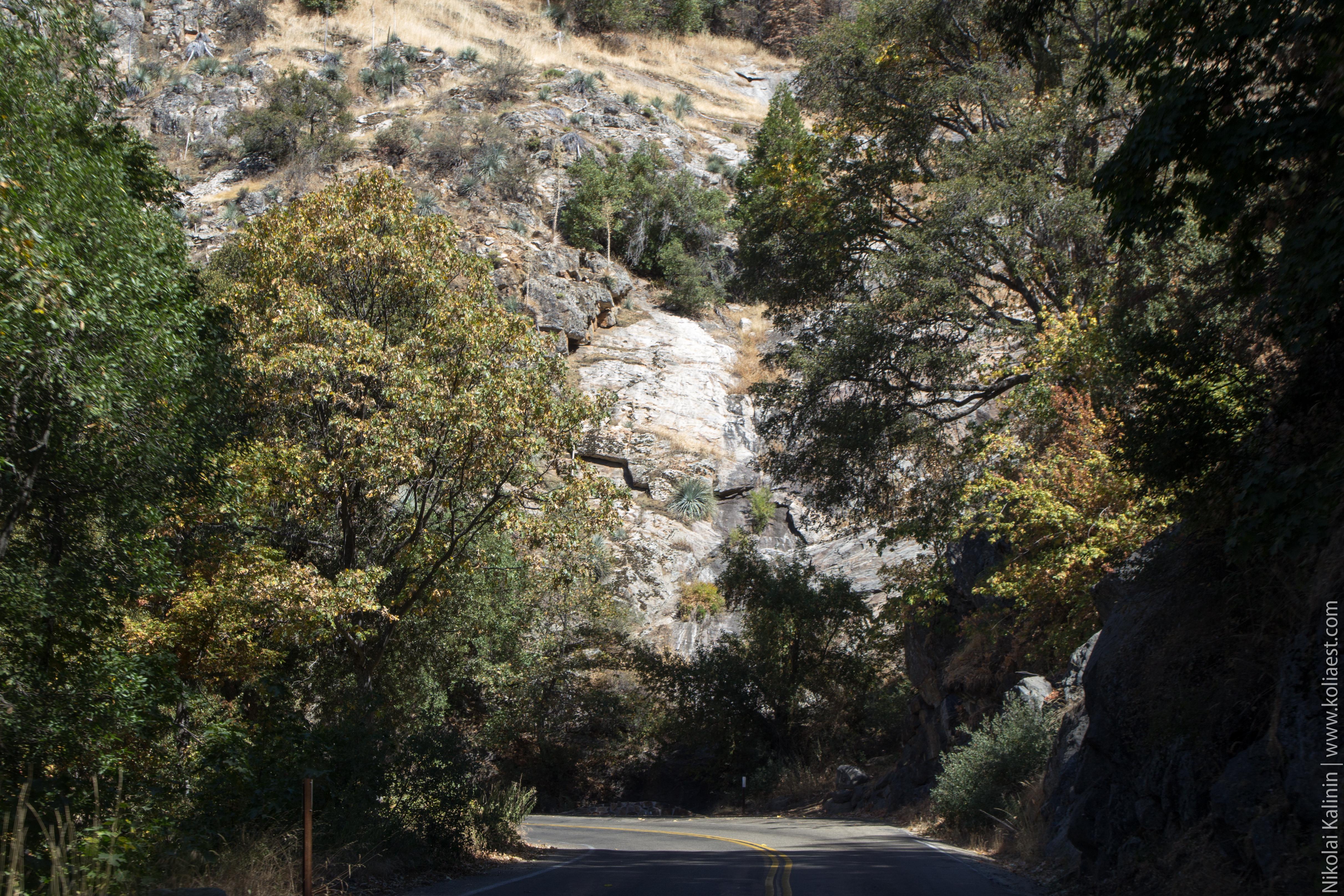 Sequoia-26