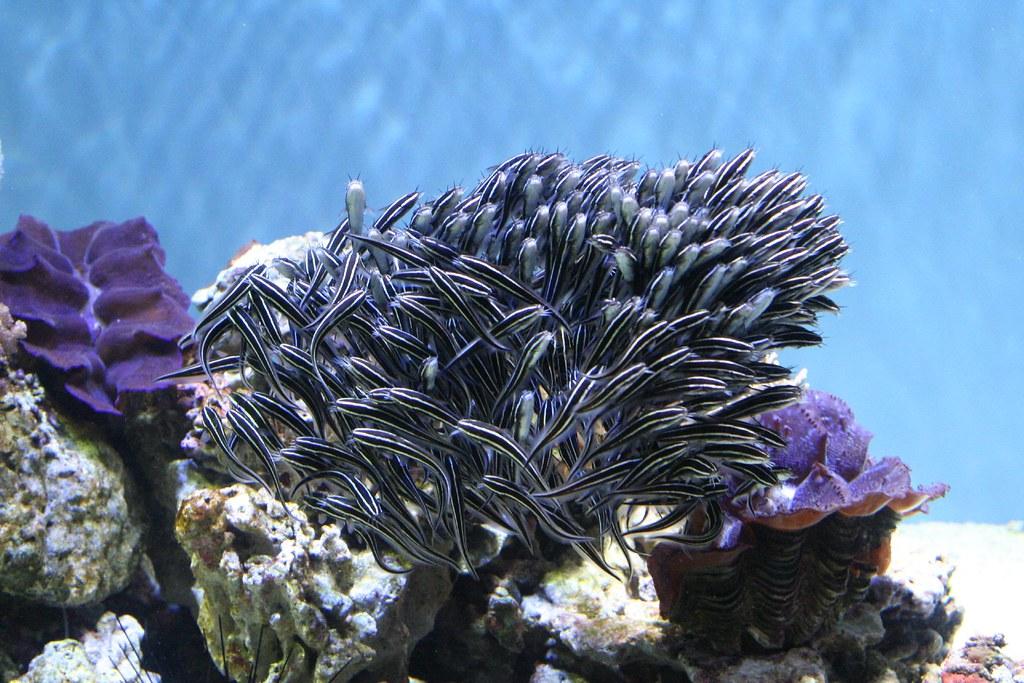 Saltwater Fish for Sale  AquariumFishnet