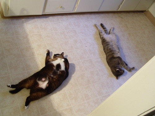 how to help my cat in heat
