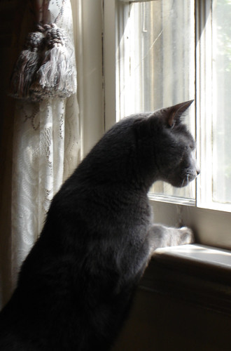 looking out | by moocatmoocat