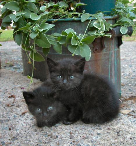Wild Kittens Two Little Girls Three Doors To The Left